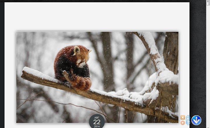 Как в Firefox добавить кнопку для быстрого перехода в начало страницы_1