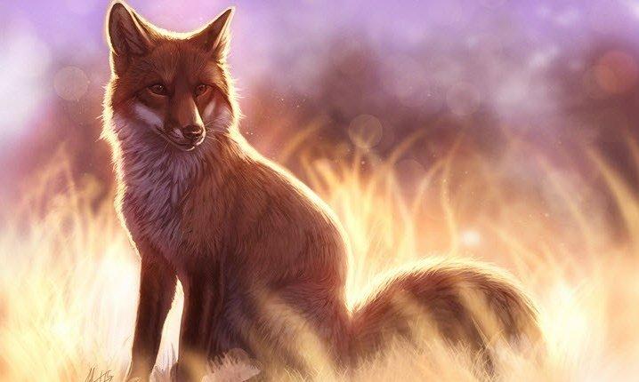 Адресная строка Firefox: приёмы, о которых вы могли не знать