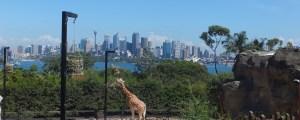 Taronga Zoo – Sydney Australia