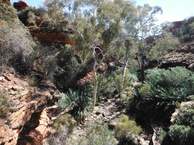 Kings Canyon rim walk