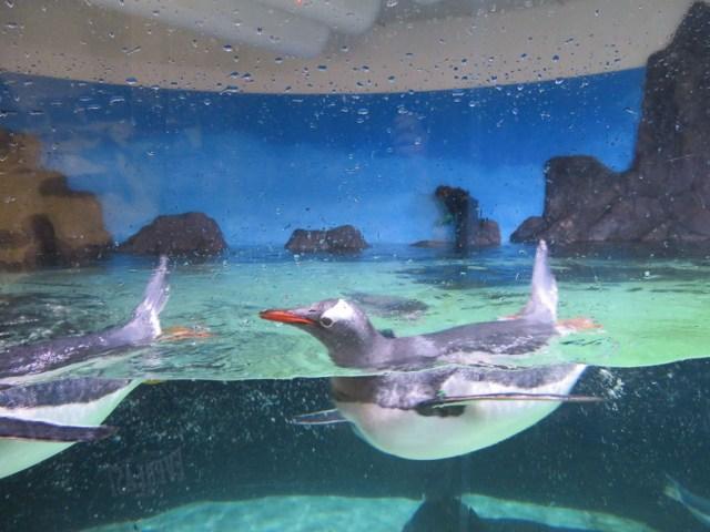 Sealife Aquarium Melbourne