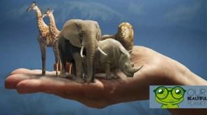 Animal welfare in schools