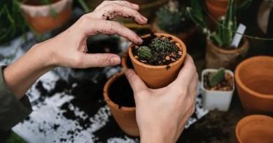 Gardening small plants