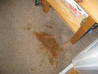 Edmonton Clean Carpets, edmonton AB | Ourbis