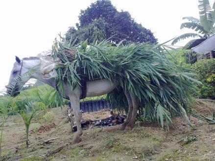 Machin - Bambu 2010-09-04
