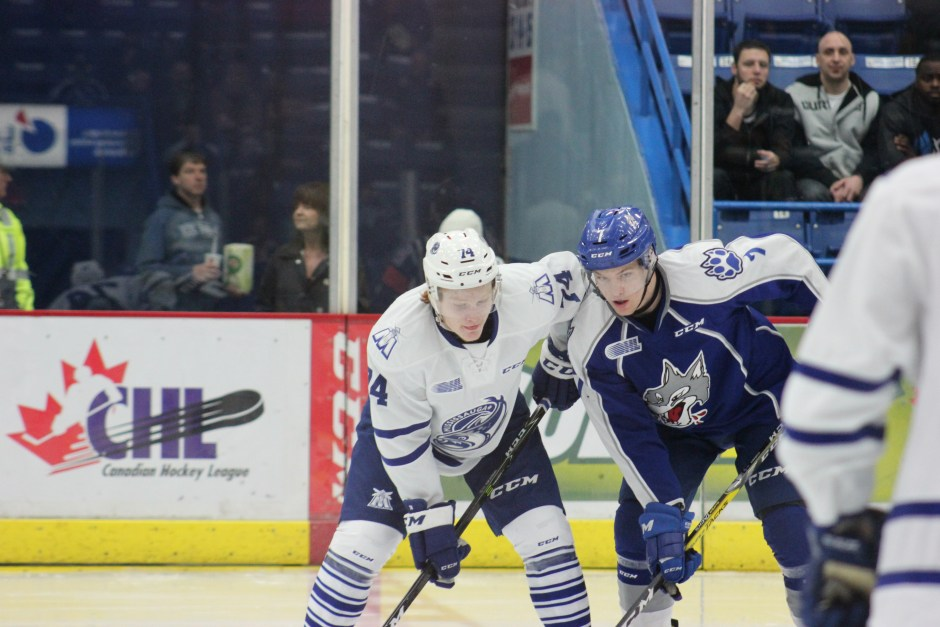 Sudbury Wolves Recap: Wolves turn in winning week!