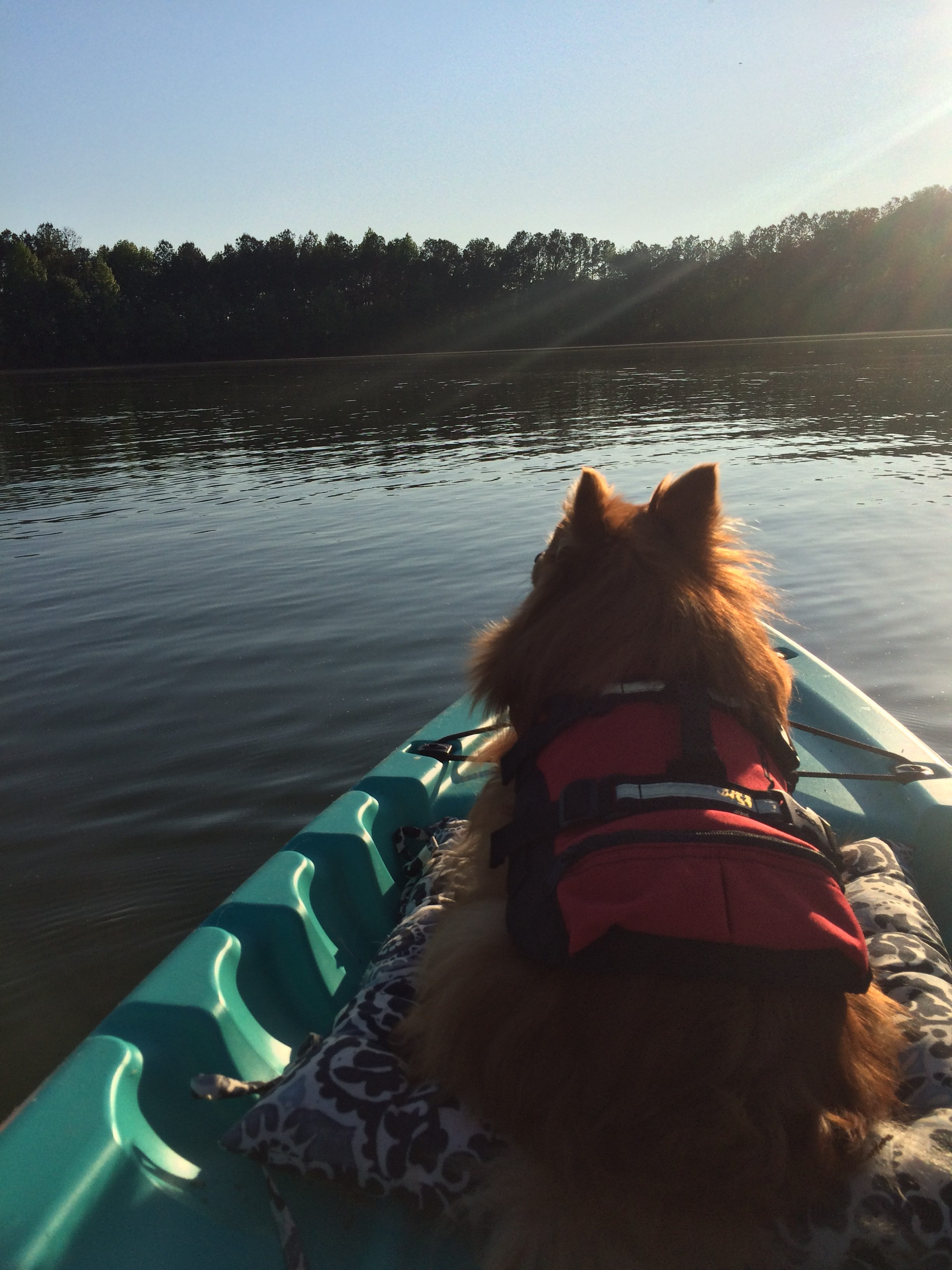 kayaking-with-your-dog-and-how-to-keep-them-safe