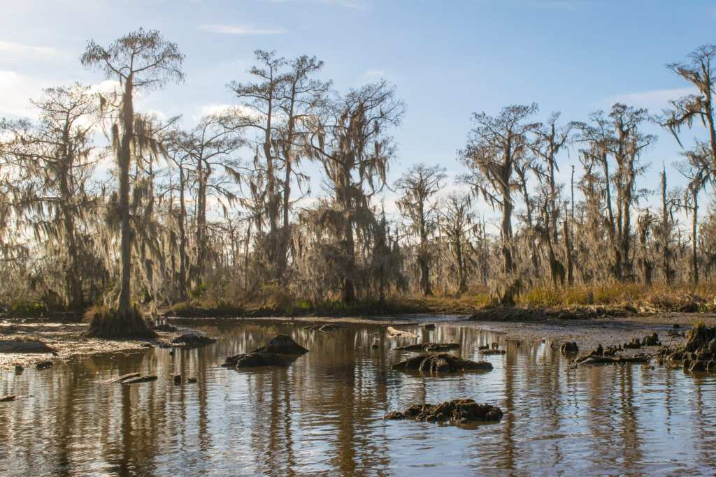 3 Days in New Orleans Itinerary: Cypress Swamp