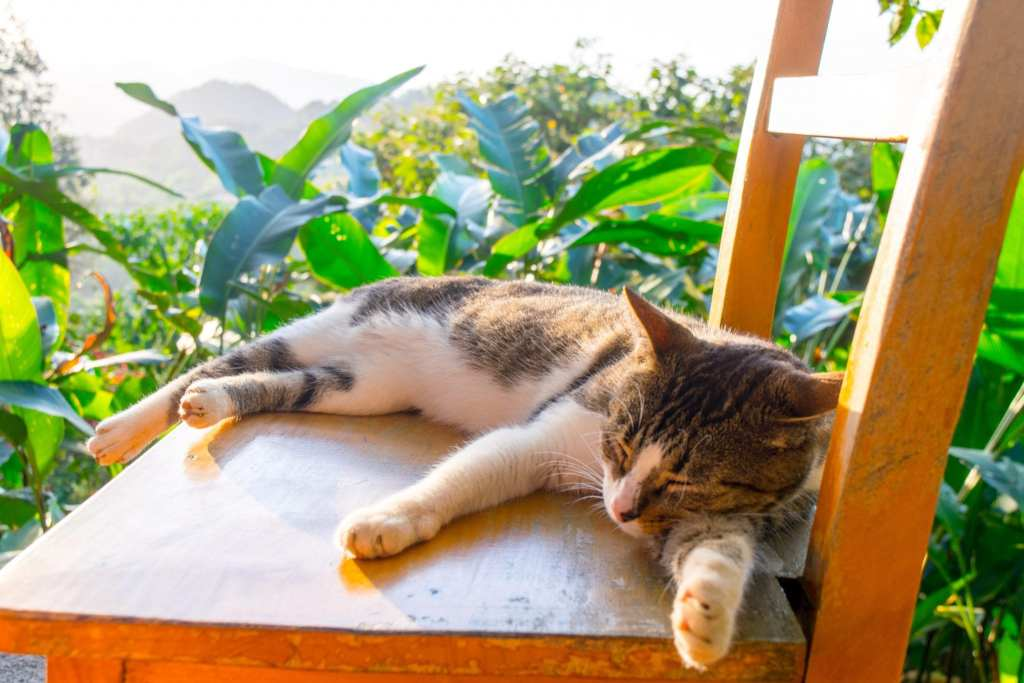 Colombia Packing List: Cat in Minca, Colombia