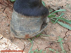 Serious Hoof Crack