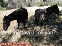 sad-horses.jpg