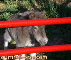 mini-foal.jpg