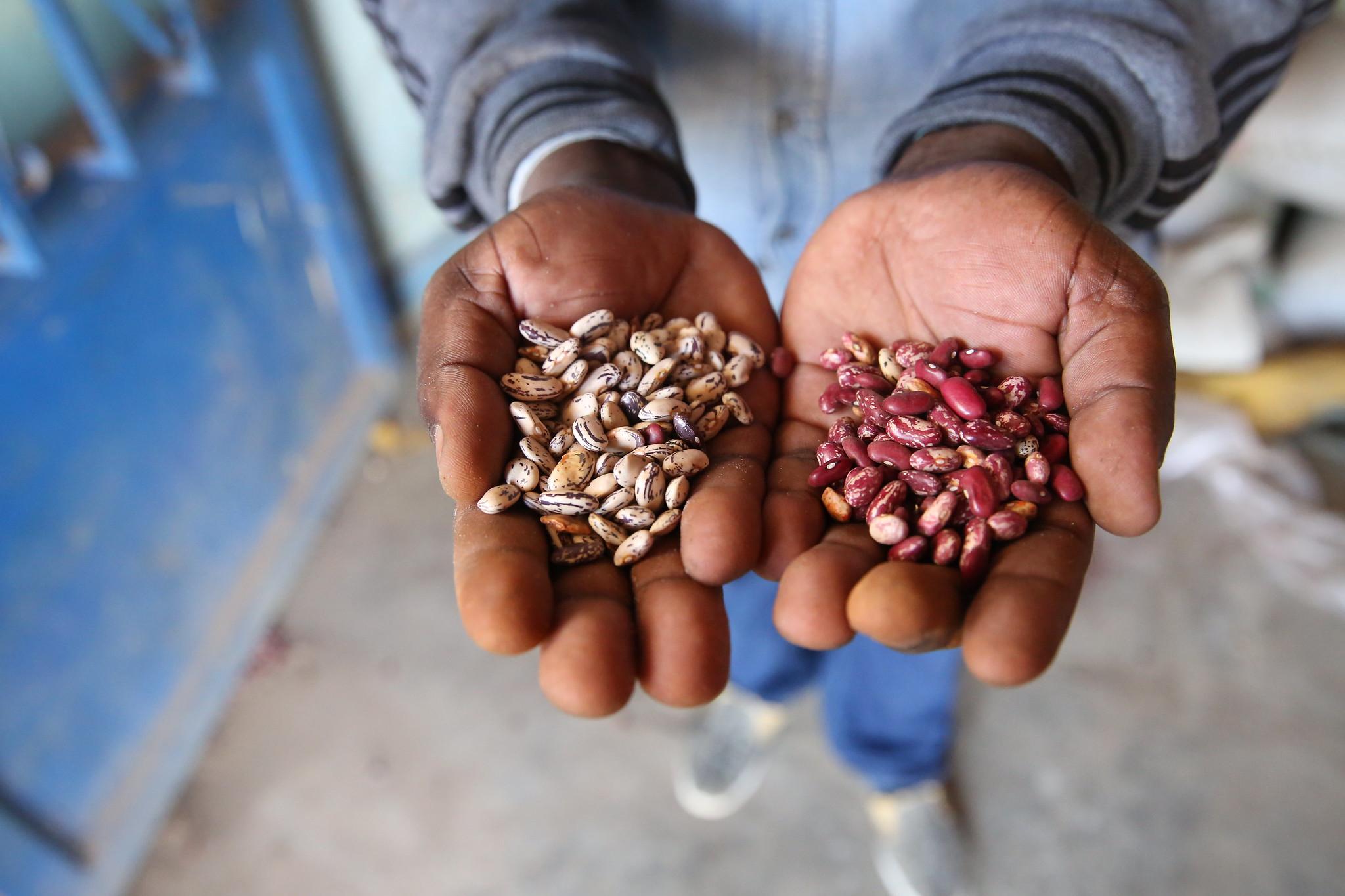 Beans diversity in Kenya, photo by Neil Palmer