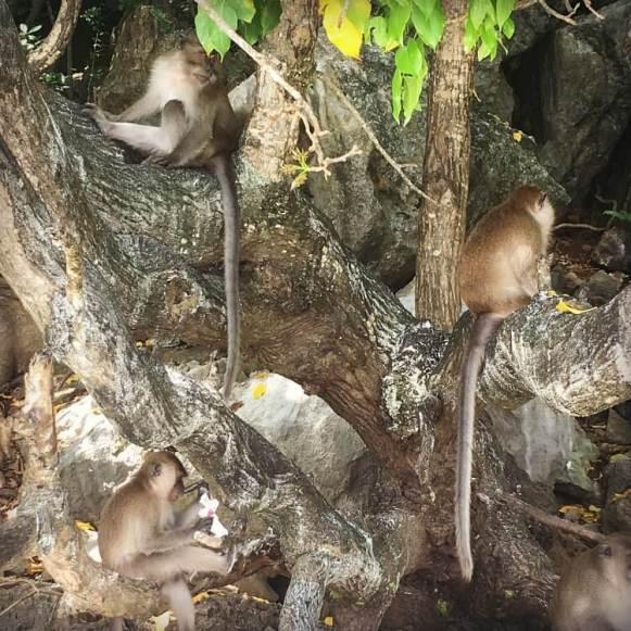 Phi Phi Islands Monkey Beach