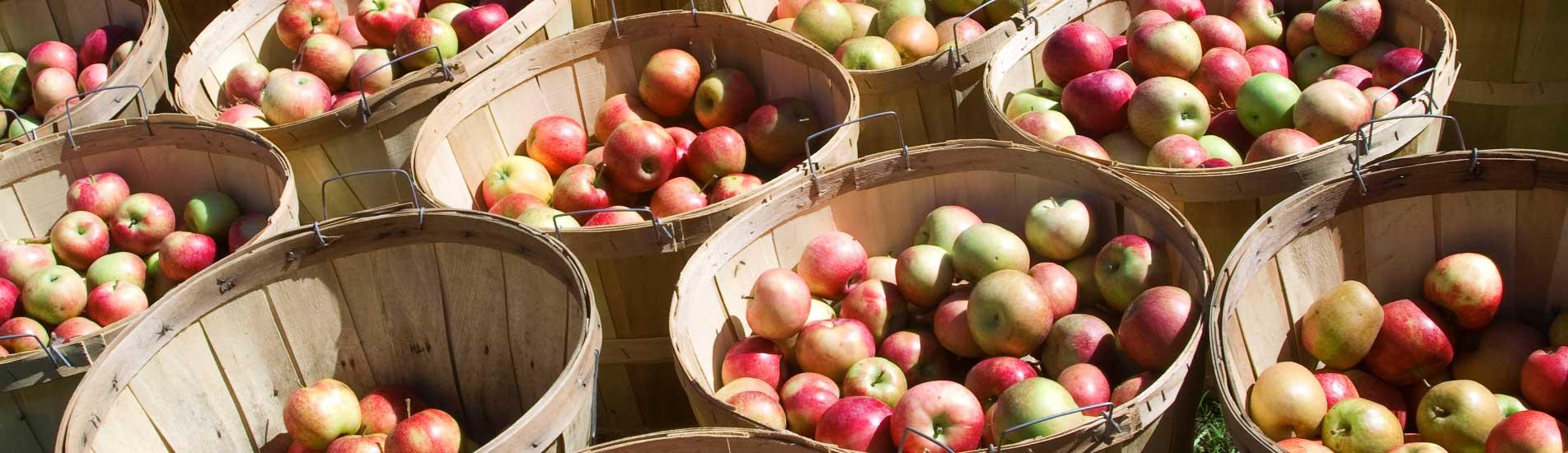 apples in buckets