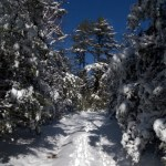 Sharing Our Lives: Snow!