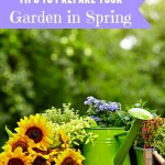 Tips to Prepare Your Garden In Spring