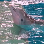 Family Travel: Clearwater Marine Aquarium
