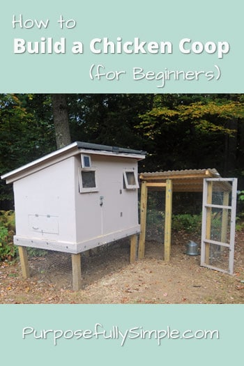 How-to-Build-a-Chicken-Coop-For-Beginners---Purposefully-Simple-