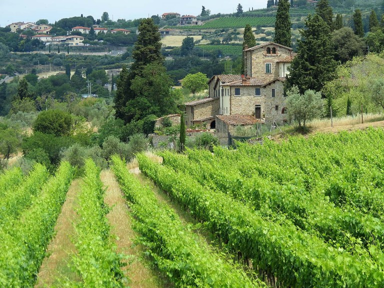 One of many vineyards in Chianti.