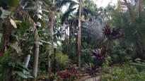 Sunken Gardens, St. Petersburg, FL
