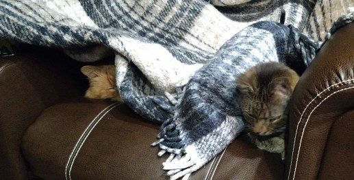 Snuggled in their favorite blankie Wheezy and Rico are ready for bed, they have found many safe places in the RV