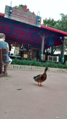 Duck tapping his foot to the music in Canada Pavilion of Epcot Center