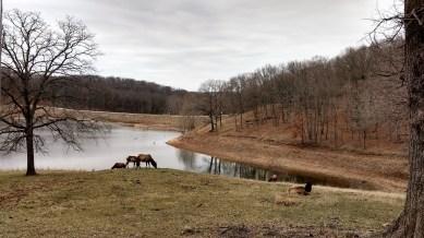 Elk at lake in Lone Elk County Park