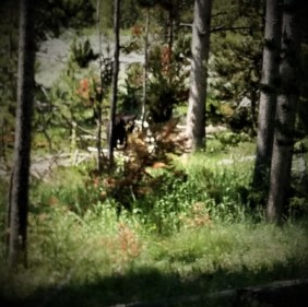 Barb's view of a bear headed into the woods after it crossed the road in front of us
