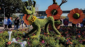 Pluto topiaries at Flower and Garden Festival