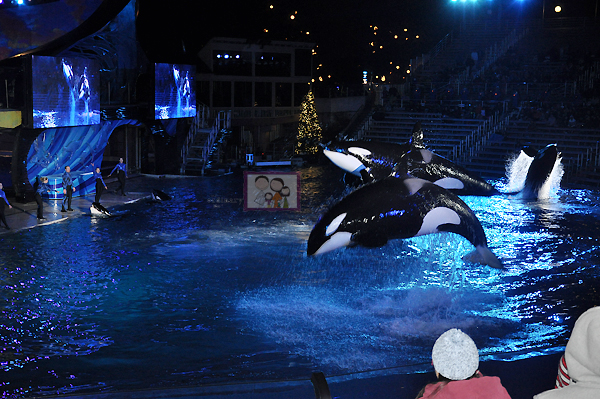 Our Journey To San Diego's Sea World