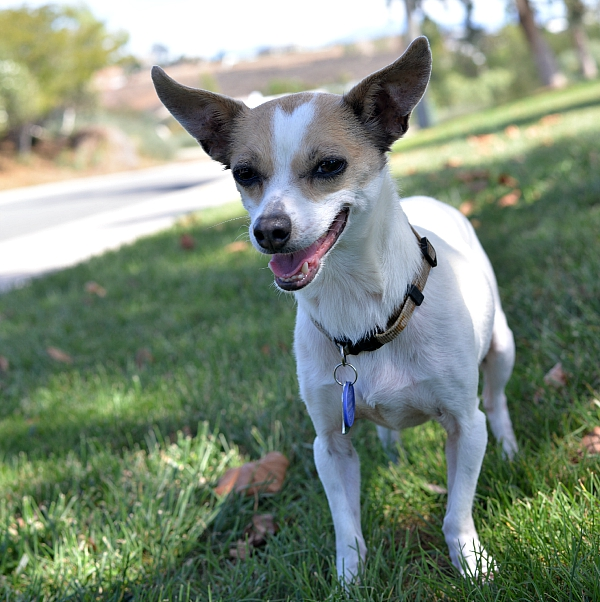 Easy Tips For Spending Time With Your Dog