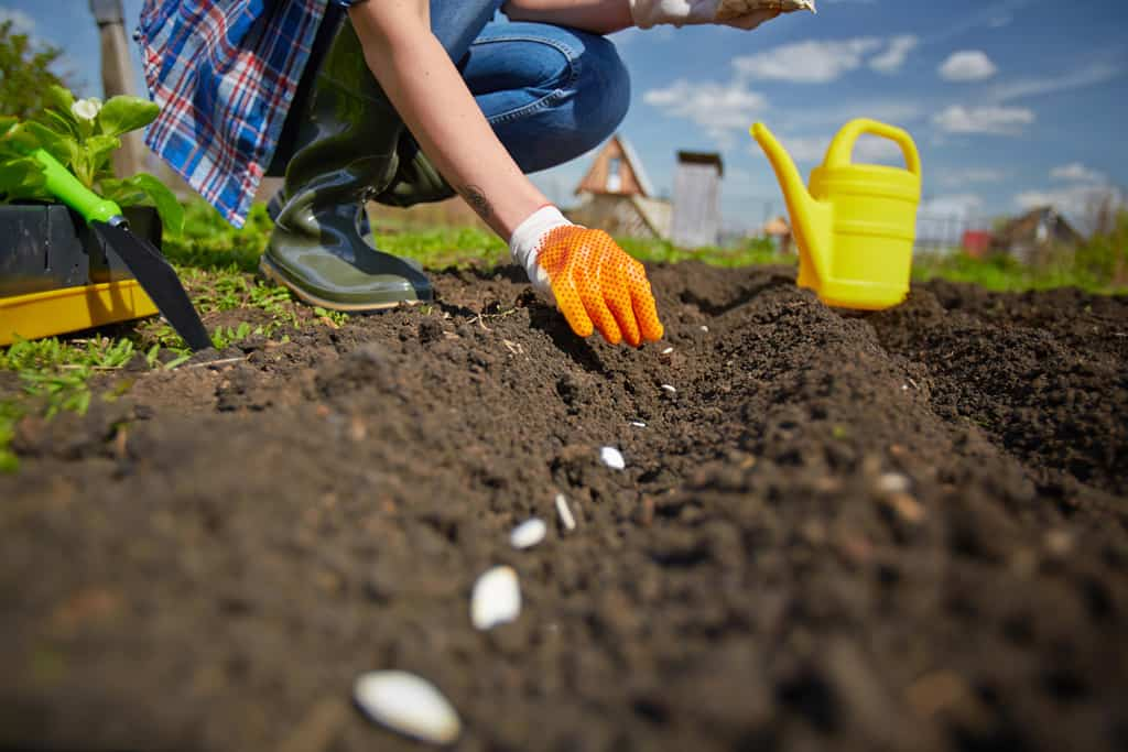 beginner gardening. Are You New To Gardening? Our Beginner Gardening Series Will Help Answer Your Questions,
