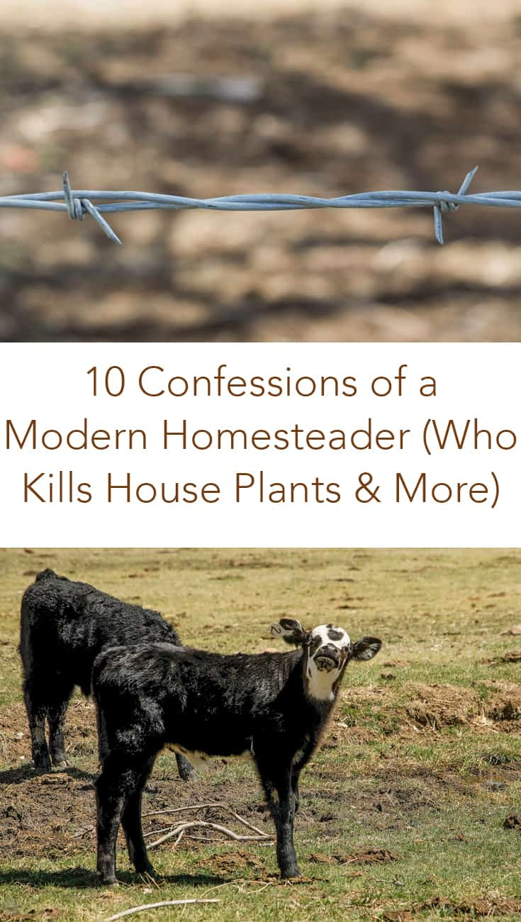What do you think a modern homesteader should be like? Click here to see my 10 confessions of a modern homesteader and how to break the stereotypes. #homesteader #homesteading #modernhomesteader
