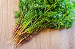 Do you have an abundance of vegetables in your garden? Click here to see what you can do with 9 different vegetables to keep your family healthy. Garden Vegetables | Abundant Harvest | Vegetable Recipes