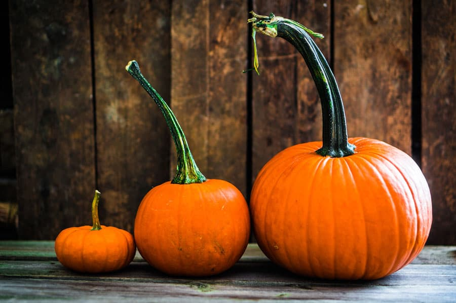 Do you love pumpkin recipes? Click here to get 67 pumpkin recipes to bring fall into your home, from pumpkin pie to body scrub. Pumpkin Recipes | Pumpkin Spice | Fall Recipes