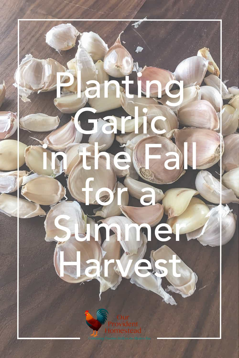 Do you grow your own garlic? Garlic is an easy and low maintenance plant that you can grow on your homestead in the fall for a great summer harvest. #growinggarlic #plantinggarlic #gardening