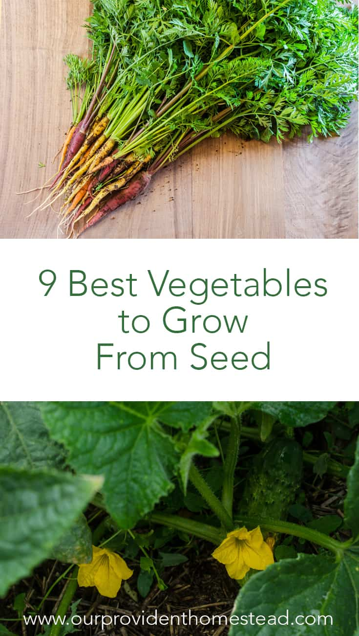 Are you a beginner gardener? Click here to see 9 of the best vegetables to grow from seed directly to your garden so that you can succeed in your first garden. Vegetable gardening for beginners can be confusing, so keep it simple with these easy gardening tips and grow your own food this year. #gardening #gardeningtips #gardeninghacks #vegetablegarden #vegetables #beginnergardening #growyourownfood