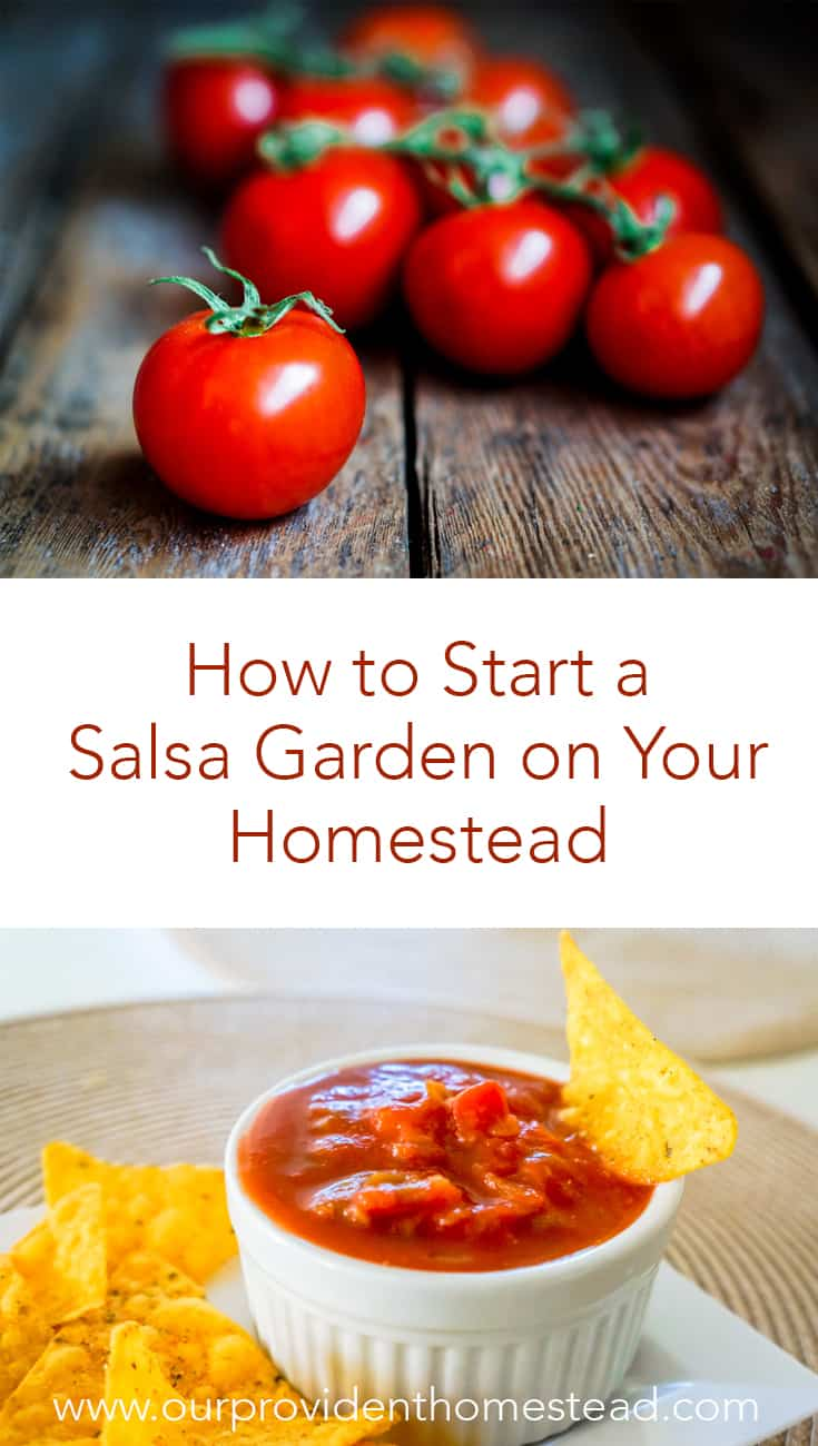 Does your family love to eat salsa? Click here to see how to start a salsa garden to grow everything for salsa and much more. #garden #gardening #gardeningtips
