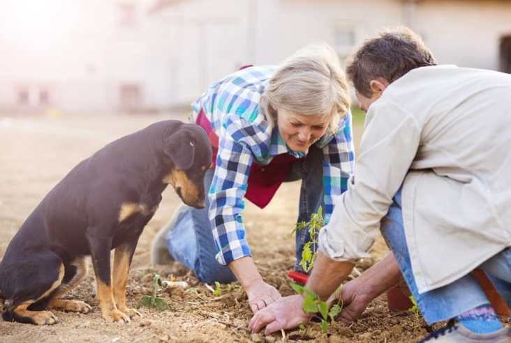 older couple and dog planting a garden
