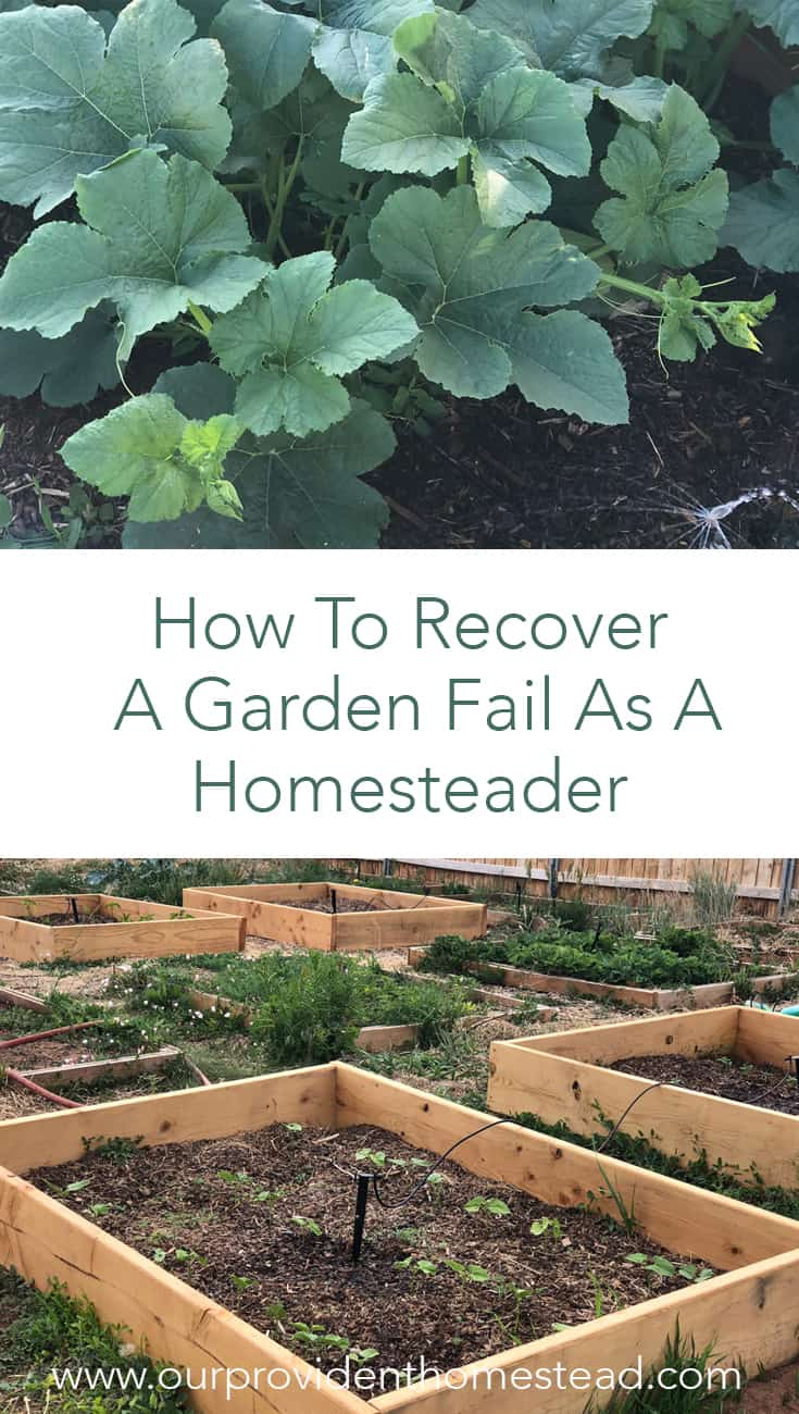 Did you have a bad garden year? Click here to see how to recover a garden fail as a homesteader and look forward to trying again next year. #gardening #gardenfail #garden #homesteading #homesteader