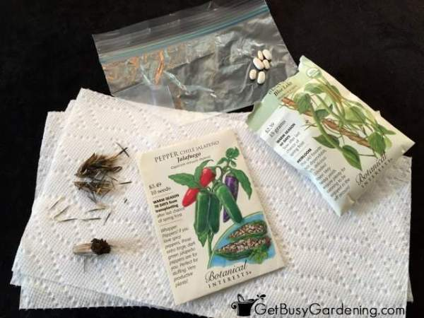 Testing Seed Viability