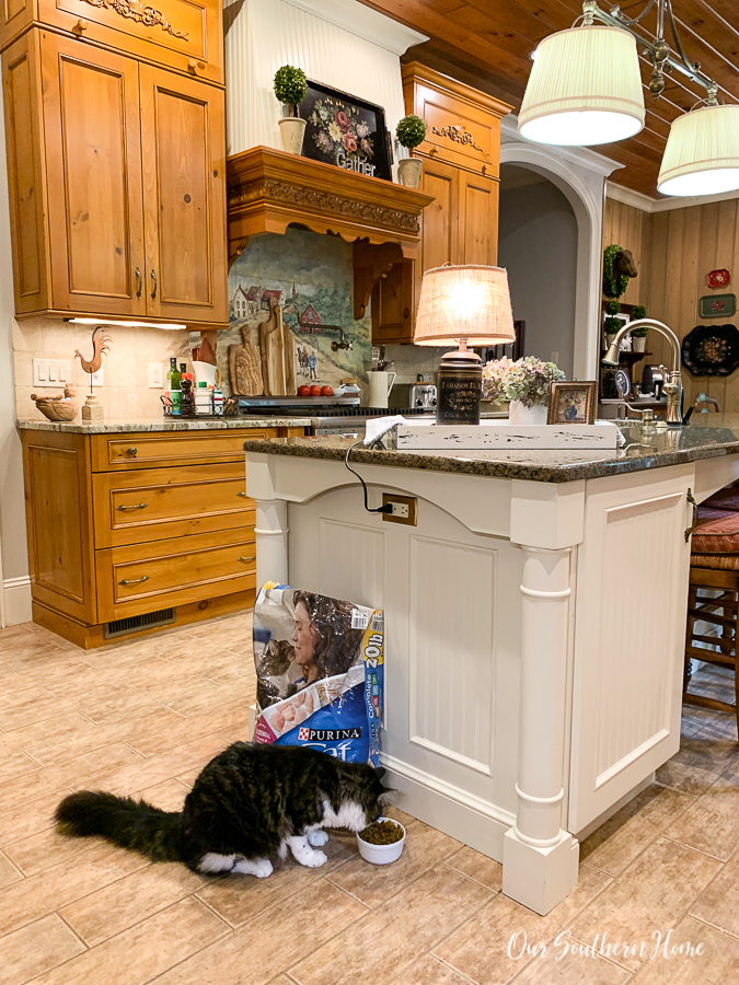 cat in kitchen