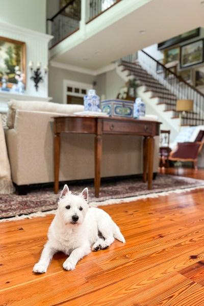 dog in family room