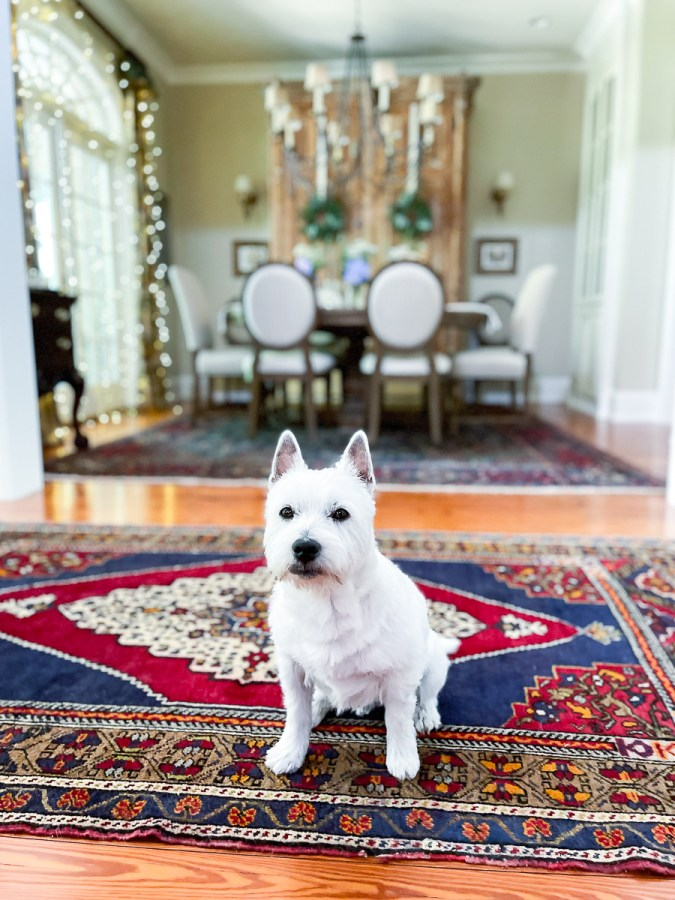 dining room and dog