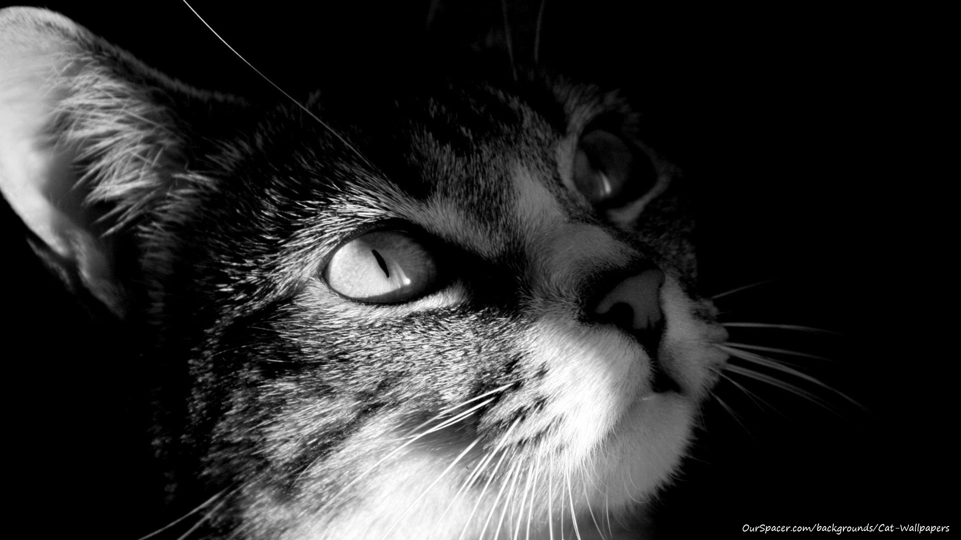 adorable cute cat staring