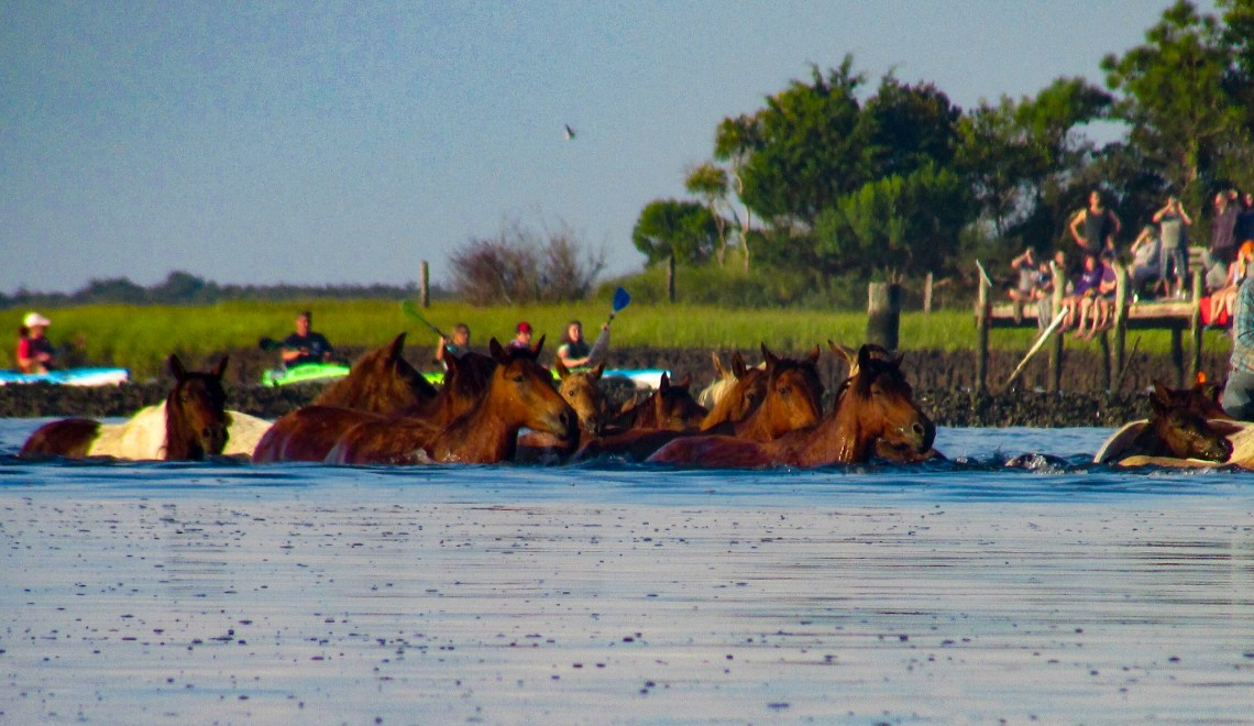 How to Enjoy Chincoteague Island's Annual Pony Swim for the First Time