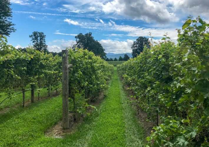 Who knew Virginia was the birthplace of American wine??! The Monticello Wine Trail has some of the best wineries in Charlottesville if not the state of Virginia and the entire world. Truly some remarkable wines come from the Blue Ridge Mountains,