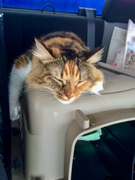 Moving cross country with cats can be hard work, but we have perfected the art of making our cat comfortable to enjoy these long road trips.