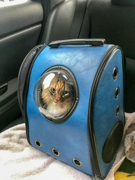 How to travel with a cat in a car? Pack a cat backpack as a cat carrier. It is a great alternative to the kennel because you can easily take your cat out during pit stops.